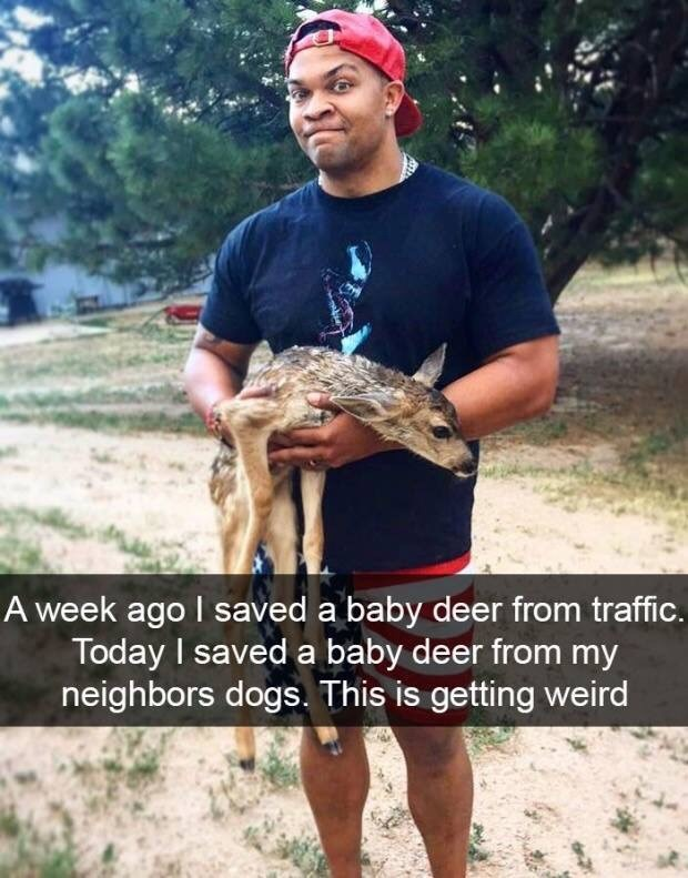 Adaptation - A week ago I saved a baby deer from traffic. Today I saved a baby deer from my neighbors dogs. This is getting weird