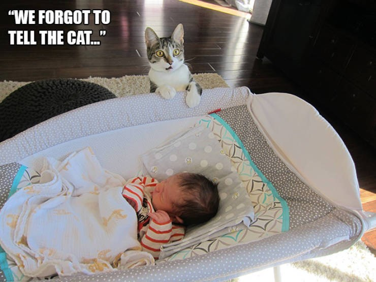"""expressive - Cat - """"WE FORGOT TO TELL THE CAT.."""""""