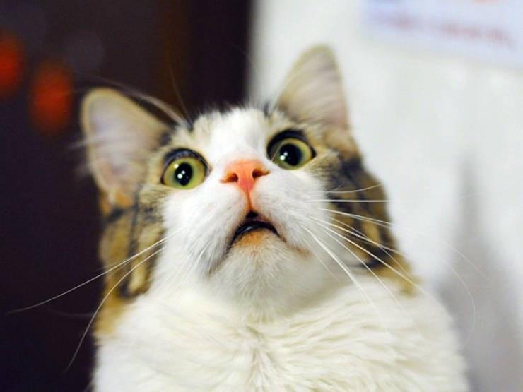 expressive - Cat