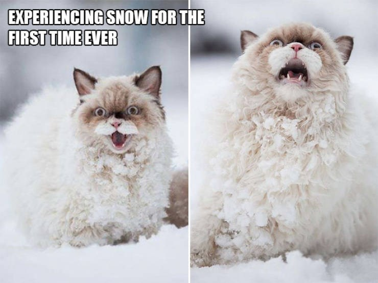 expressive - Canidae - EXPERIENCING SNOW FOR THE FIRST TIME EVER