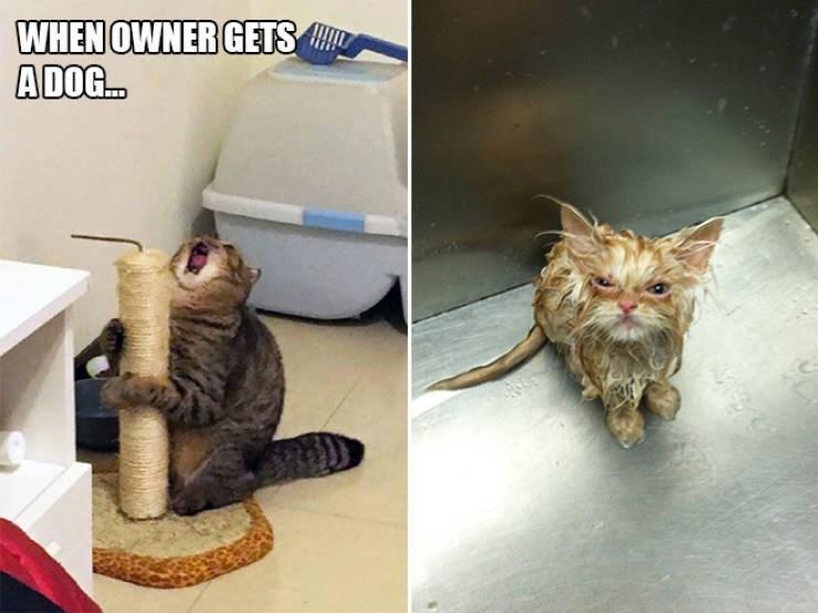 expressive - Cat - WHEN OWNER GETS ADOG..