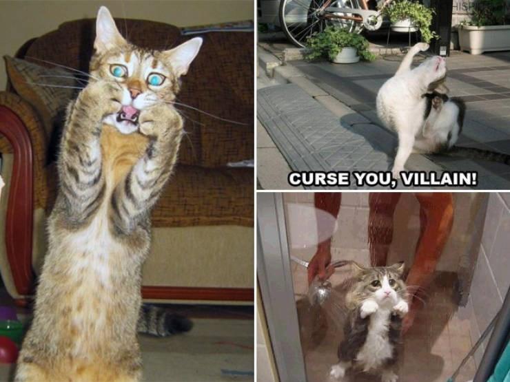expressive - Cat - HISH CURSE YOU, VILAIN!