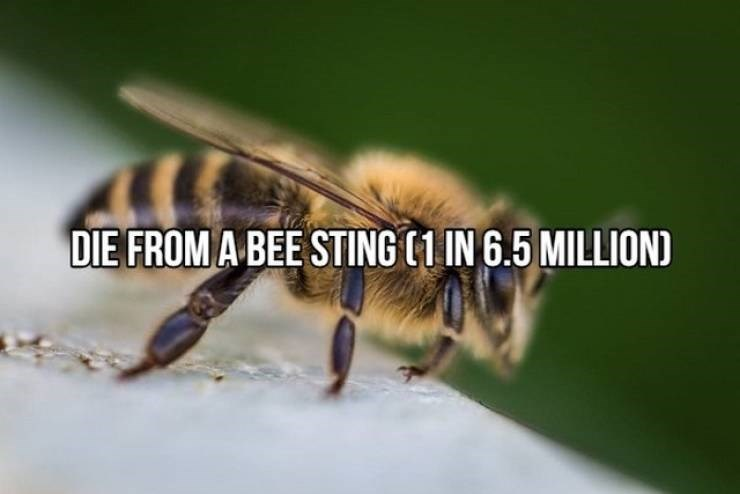 """Text that reads, """"Die from a bee sting (1 in 6.5 million)"""""""