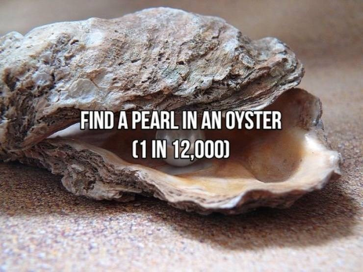 """Text that reads, """"Find a pearl in an oyster (1 in 12,000)"""""""
