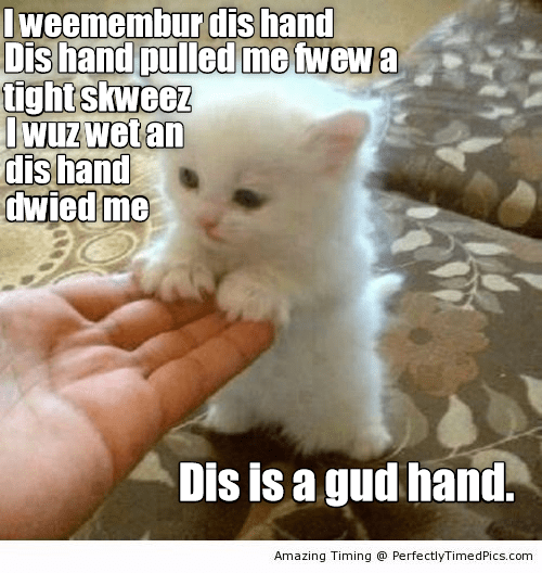 Cat - I weemembur dis hand Dis hand pulled me fwew a tight skweez Iwuz wet an dis hand dwied me Dis is a gud hand. Amazing Timing @ PerfectlyTimed Pics.com