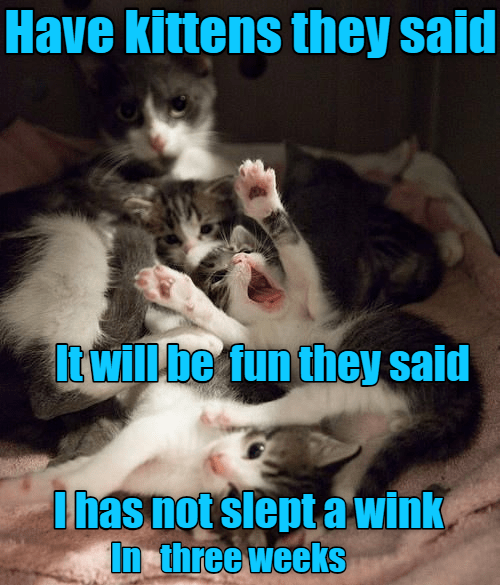 Photo caption - Have kittens they said Itwillbe fun they said Ihas not slept a wink, In three weeks