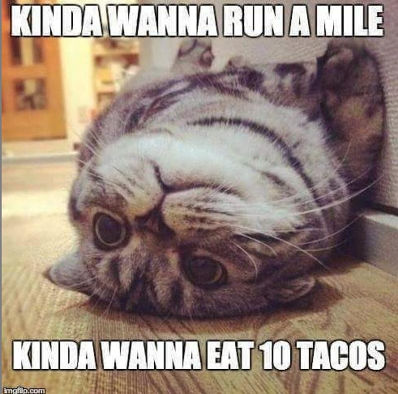 Cat - KINDA WANNA RUNA MILE KINDA WANNA EAT 10 TACOS Emgfip.com