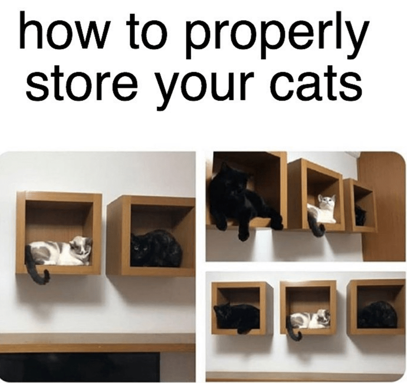 Product - how to properly store your cats