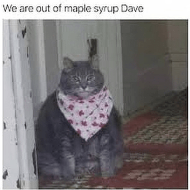 Cat - We are out of maple syrup Dave