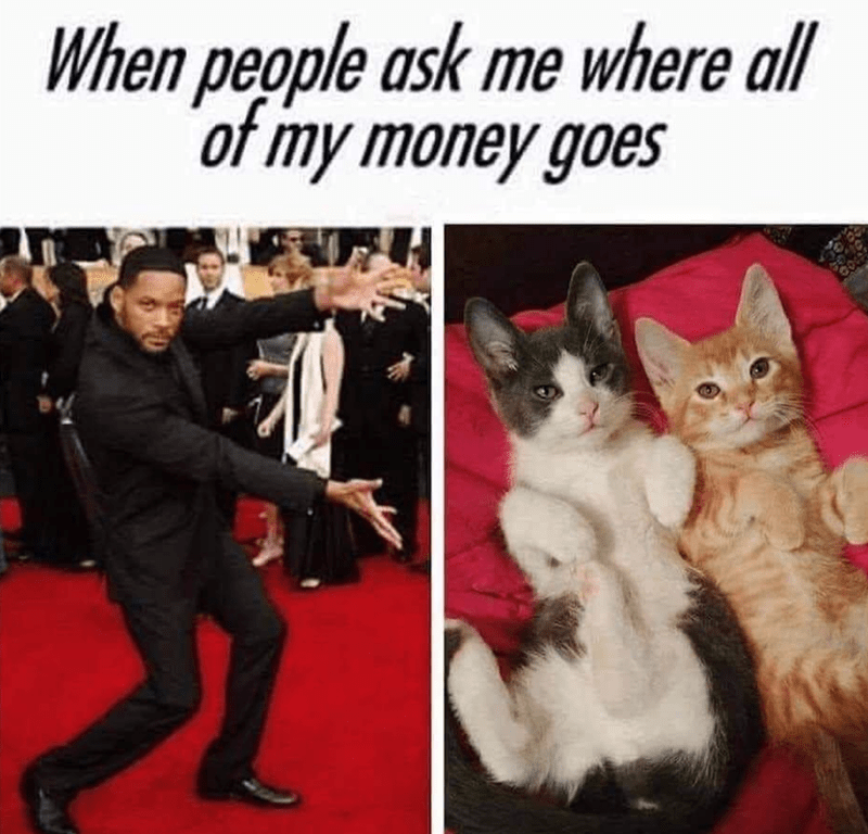 Cat - When people ask me where all of my money goes