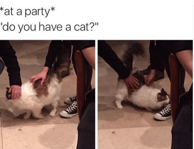 """Cat - at a party* """"do you have a cat?"""" w"""