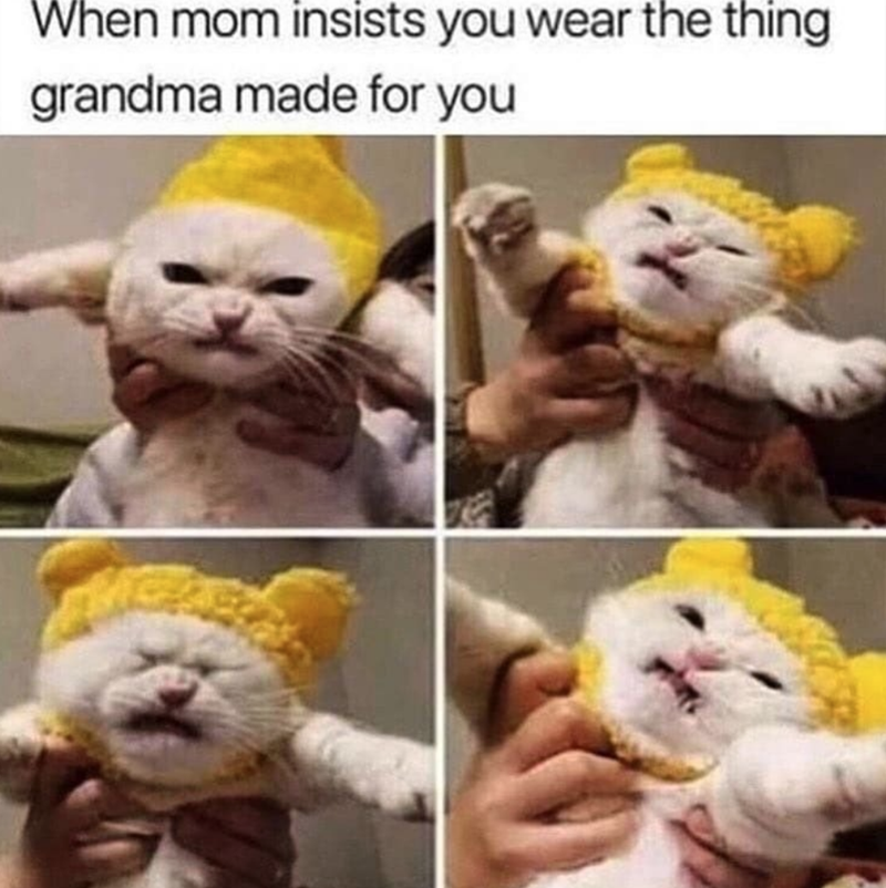 Felidae - When mom insists you wear the thing grandma made for you