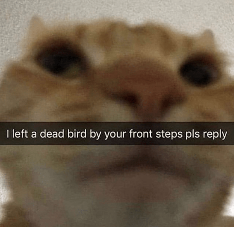 Nose - I left a dead bird by your front steps pls reply