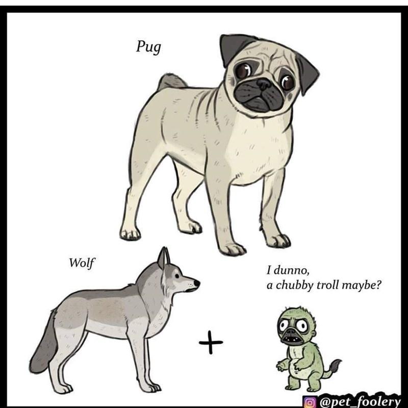 Dog - Pug Wolf I dunno, a chubby troll maybe? @pet_foolery