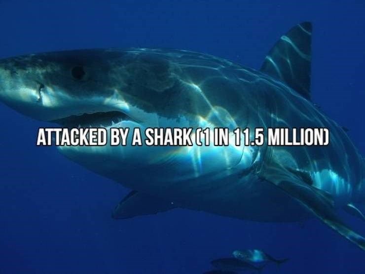 Fish - ATTACKED BY A SHARK1 IN 11.5 MILLIOND