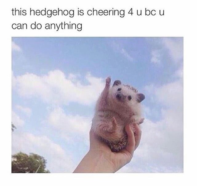 wholesome meme - Adaptation - this hedgehog is cheering 4 u bc u can do anything