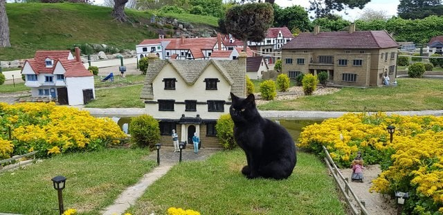 Black cat - aviClin