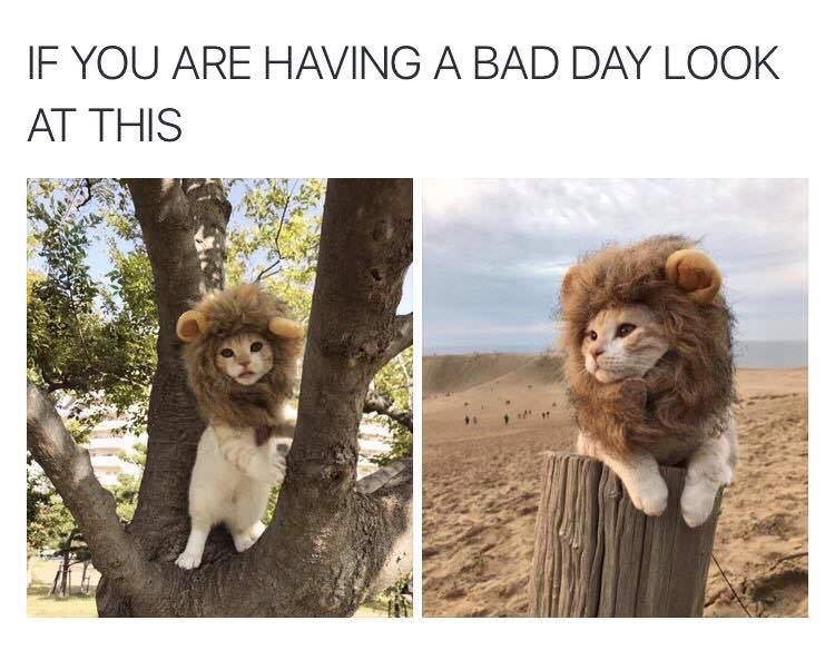 """Caption that reads, """"If you are having a bad day look at this"""" above photos of a cat wearing a lion's mane costume"""