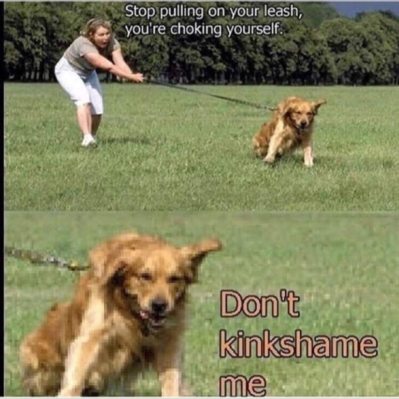 dank memes - Dog - Stop pulling on your leash, you're choking yourself Don't kinkshame me