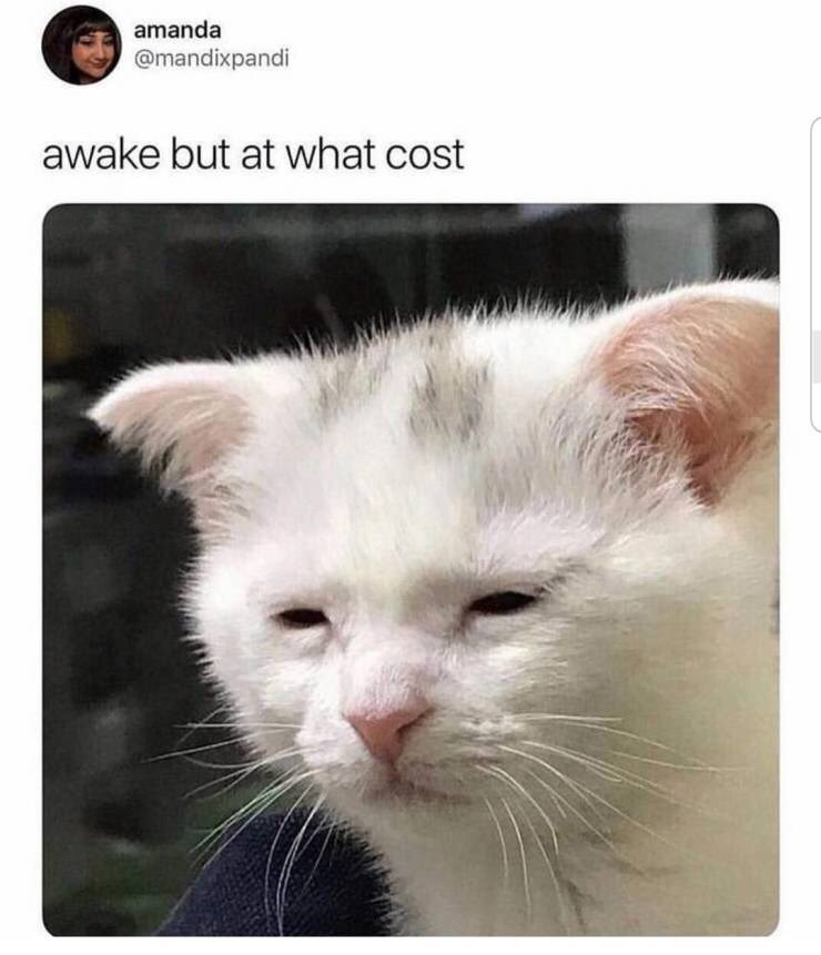 "Caption that reads, ""Awake but at what cost"" above a photo of a tired-looking cat"