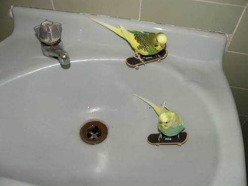 cursed image - Sink with birds skateboarding