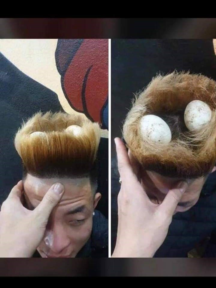 cursed image - Hair that has a nest on it