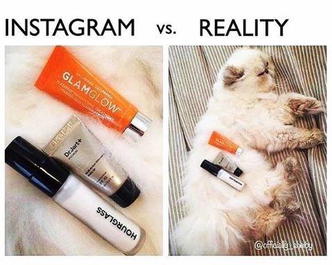 'Instagram vs. Reality' meme - makeup on a cat