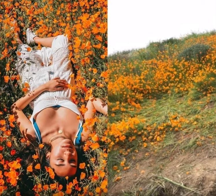 'Instagram vs. Reality' memes - People in nature - R