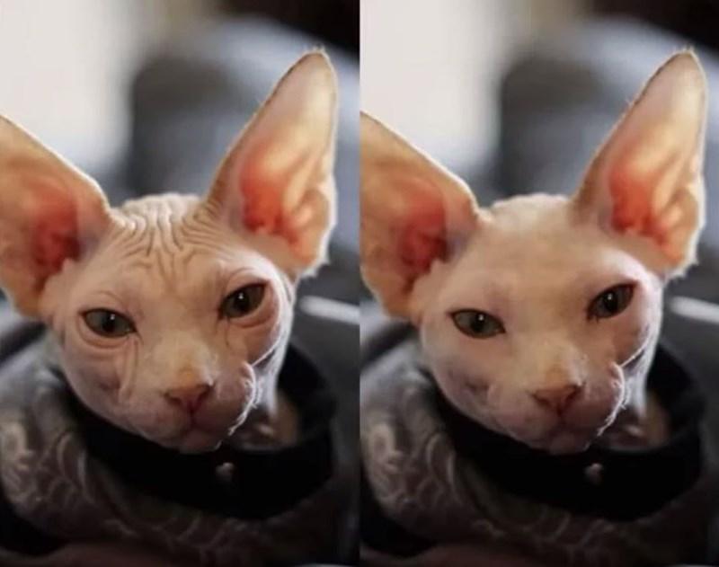 'Instagram vs. Reality' meme - wrinkly cat