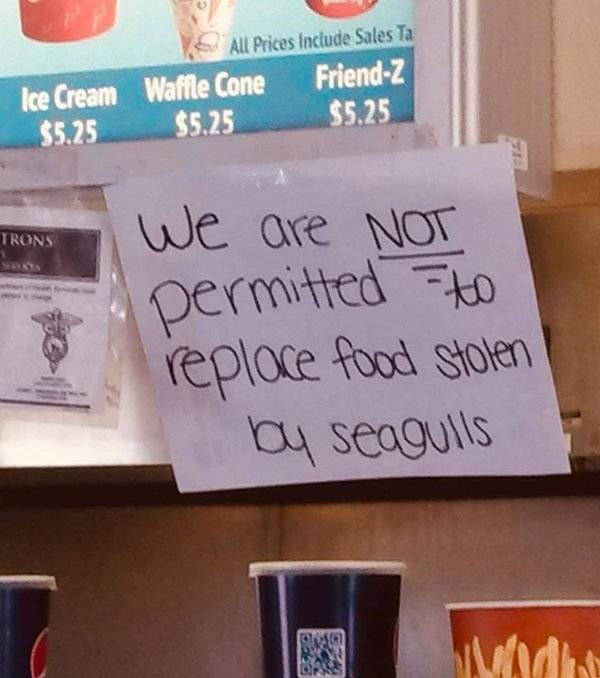 """Funny sign that reads, """"We are NOT permitted to replace food stolen by seagulls"""""""