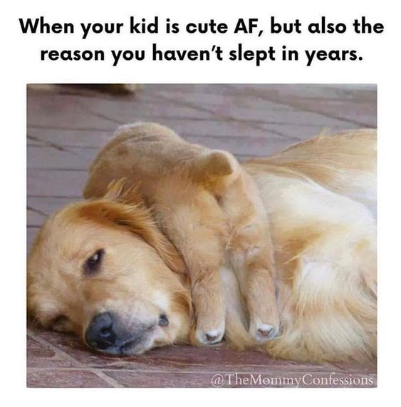 Mother's Day Meme - Golden retriever - When your kid is cute AF, but also the reason you haven't slept in years @TheMommyConfessions