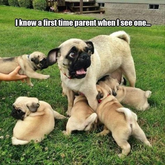 Mother's Day Meme - Dog - Oknowafirst time parent whenIsee one.