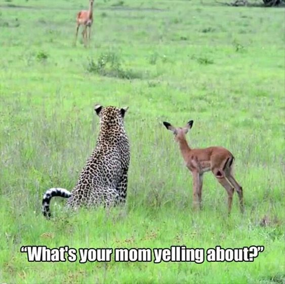 Mother's Day Meme - Terrestrial animal - What's your momyelling about?