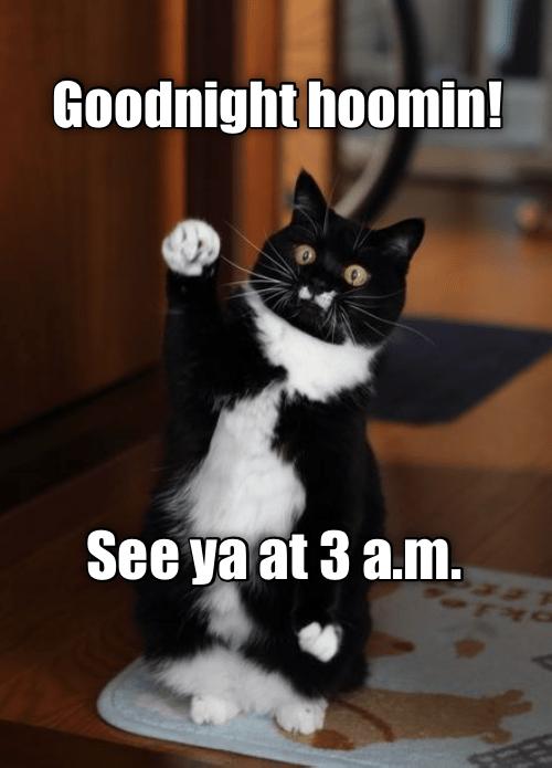 cat meme - Cat - Goodnight hoomin! See ya at 3 a.m.