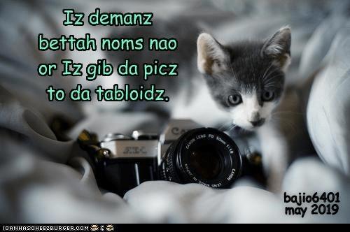 Cheezburger Image 9305101568