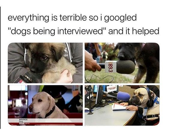 "wholesome memes - Canidae - everything is terrible so i googled ""dogs being interviewed"" and it helped BOUNCE 89.3"