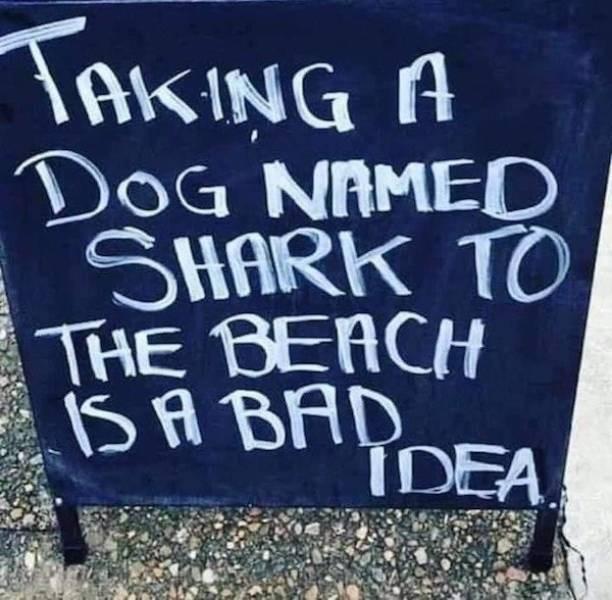 Font - TAKING A DOG NAMEC SHARK TO THE BEACH ISA BAD IDEA