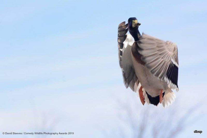 Bird - dbsp O David Steeves Comedy Wildlife Photography Awards 2019