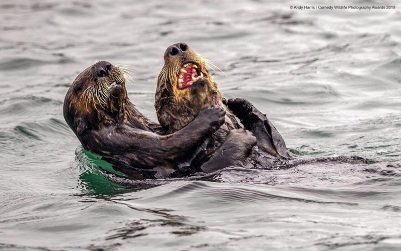 Steller sea lion - Andy Harris Comedy Wildlife Photography Awards 2019