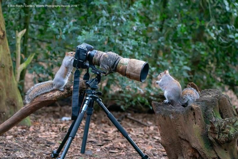 Tripod - Bob Riach/Comedy Wildlife Photography Awards 2019