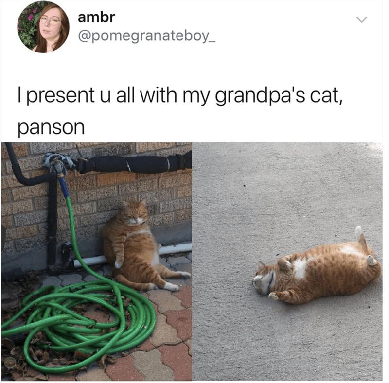 Adaptation - ambr @pomegranateboy_ Ipresent u all with my grandpa's cat, panson