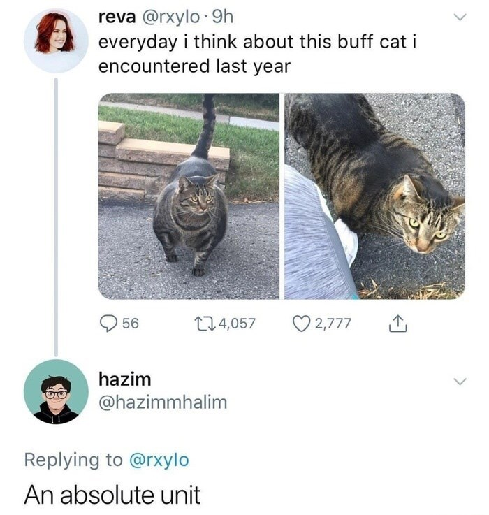 Text - reva @rxylo 9h everyday i think about this buff cat i encountered last year 1 .4,057 56 2,777 hazim @hazimmhalim Replying to @rxylo An absolute unit