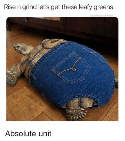 Tortoise - Rise n grind let's get these leafy greens @cabbagecatmemes Absolute unit AKMAAn