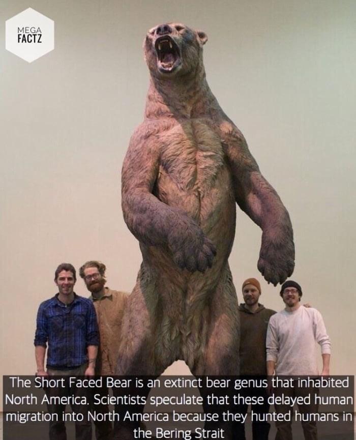 absolute unit, huge extinct bear