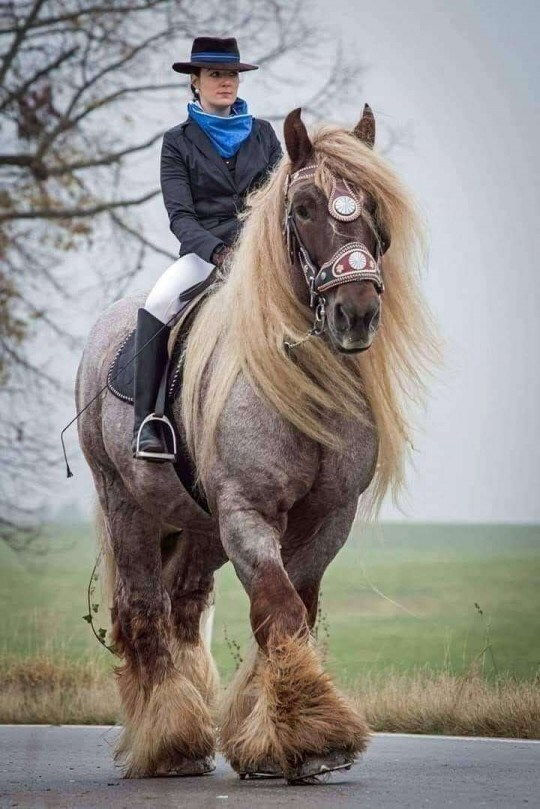 Absolute unit, large horse