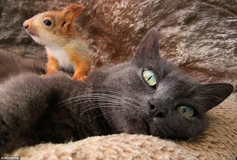 Cat - OREUTERS