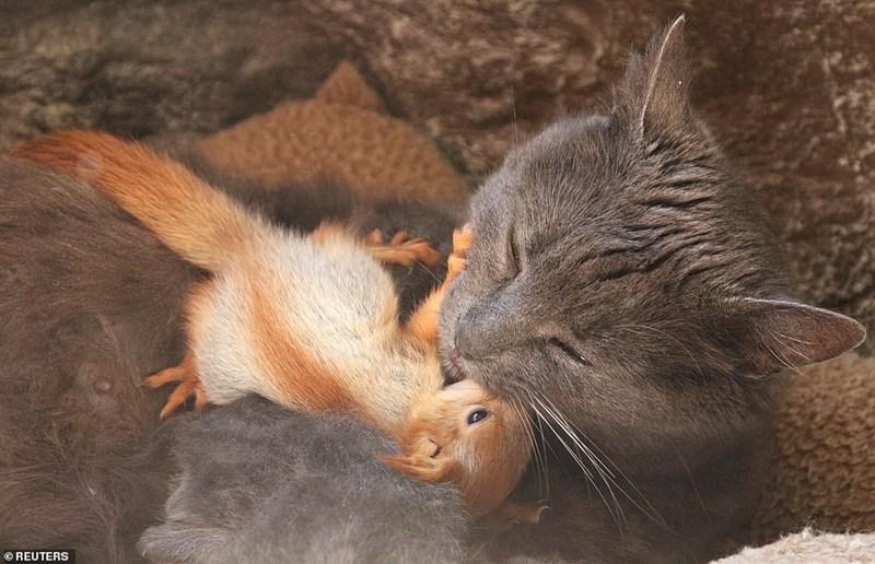 Mammal - OREUTERS