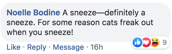 Text - Noelle Bodine A sneeze-definitely a sneeze. For some reason cats freak out when you sneeze! 9 Like Reply Message 16h