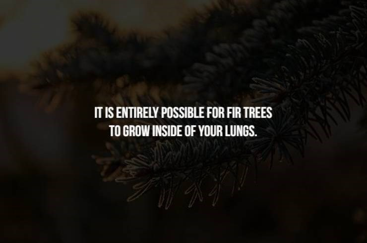 Nature - IT IS ENTIRELY POSSIBLE FOR FIR TREES TO GROW INSIDE OF YOUR LUNGS.