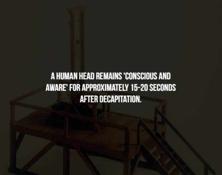 Furniture - A HUMAN HEAD REMAINS CONSCIOUS AND AWARE' FOR APPROXIMATELY 15-20 SECONDS AFTER DECAPITATION